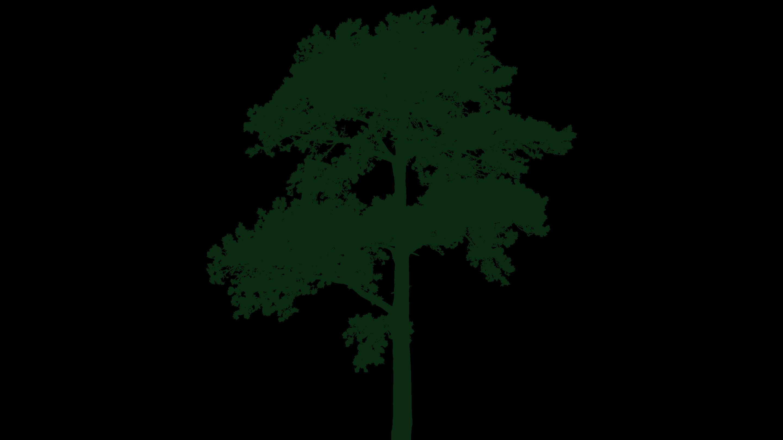 vitree main tree